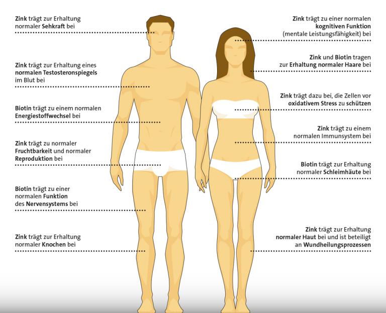 Zink und Biotin – Unterstützung für den ganzen Körper